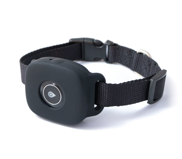 4g tracker on collar